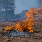 A brush fire burns crop residues in The Gambia