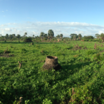 A panoramic view of the Sanyang Village project site