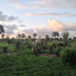 GGD project site in Sanyang Village at sunset